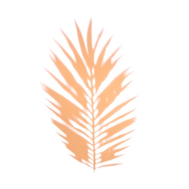Ein orange palmblatt auf weißem hintergrund Kostenlose Fotos