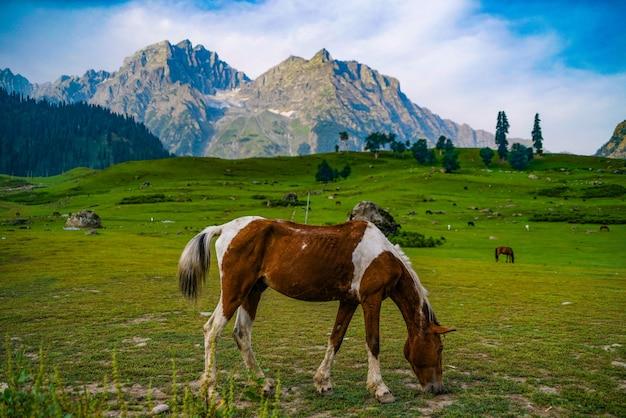 Ein pferd mit aussicht Premium Fotos