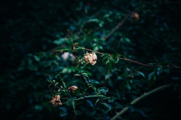 Ein pflanzenzweig, umgeben von viel grün Kostenlose Fotos