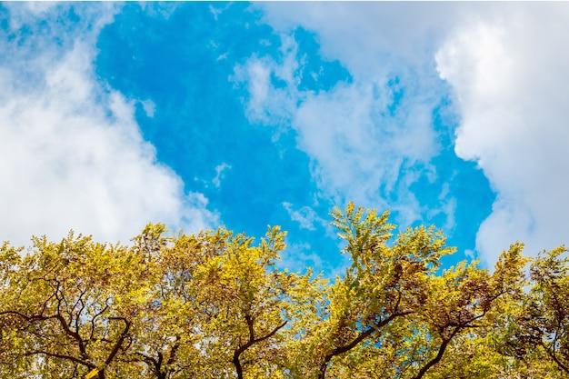Ein rahmen aus blättern gegen den himmel Premium Fotos