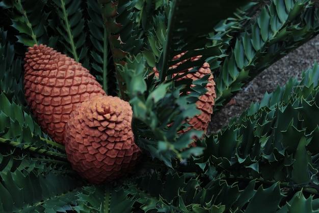 Ein schöner schuss von cycad pflanze Kostenlose Fotos