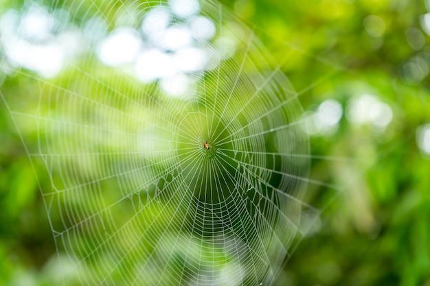 Ein spinnennetz der klassischen kreisformspinne im regenwald. Premium Fotos