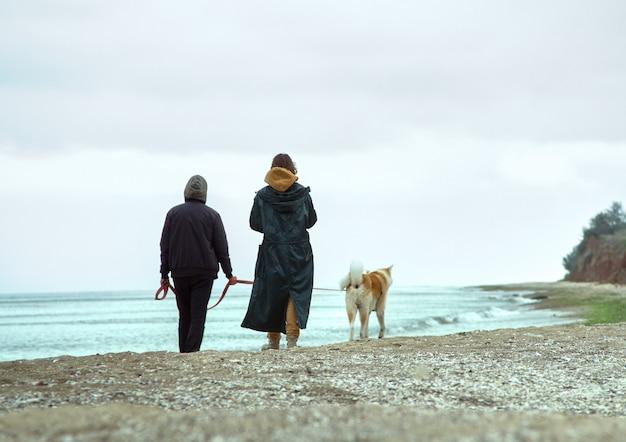 Ein strandspaziergang mit hund Premium Fotos
