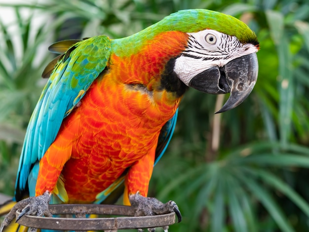 Ein wunderschöner ara und papagei Premium Fotos