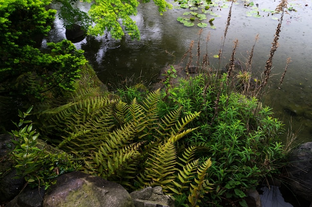 Eine ansicht vom grünen garten tennoji keitakuen Premium Fotos