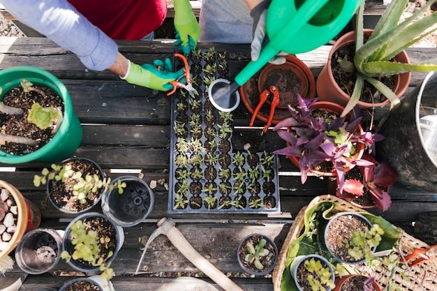 Eine draufsicht des männlichen und weiblichen gärtners, der die sämlingspflanzen beschneidet und wässert Kostenlose Fotos