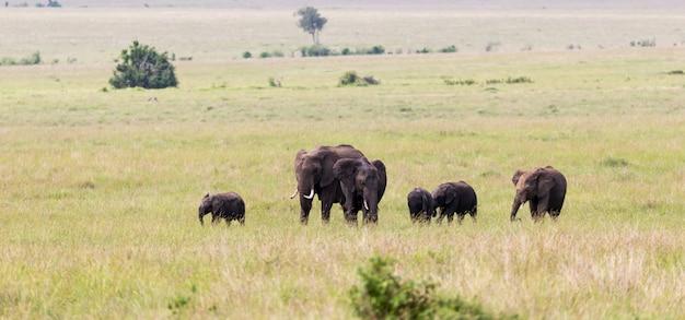 Eine elefantenfamilie auf dem weg durch die kenianische savanne Premium Fotos
