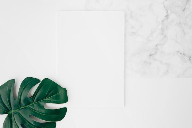 Eine erhöhte ansicht des grünen monsterblattes auf weißer leerer karte über dem schreibtisch Kostenlose Fotos