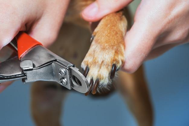 Eine frau schneidet nägel auf einer hundetatzenahaufnahme. Premium Fotos