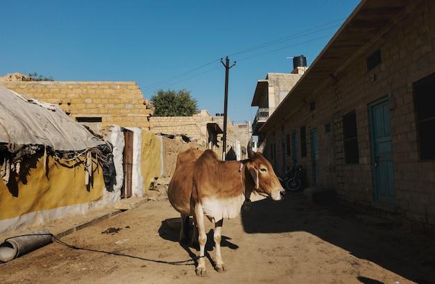 Eine heilige kuh in einer straße von indien Kostenlose Fotos