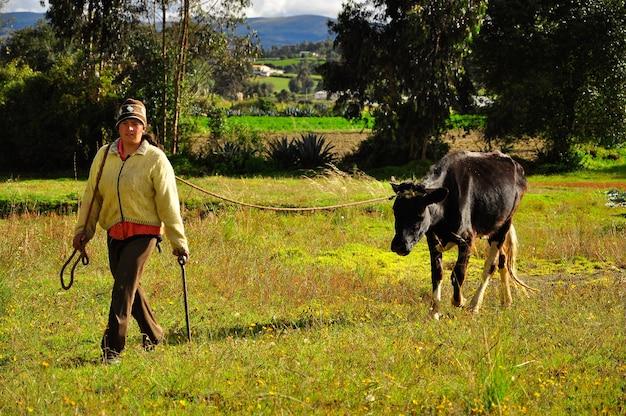 Eine junge frau, die in einem feld mit einer einzelnen schwarzen kuh geht. Premium Fotos