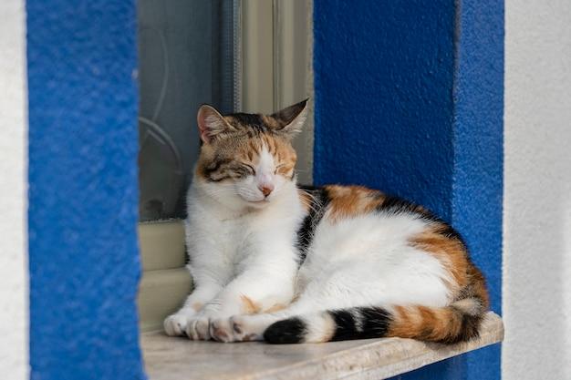 Eine katze sitzt auf einer fensterbank in der nähe des meeres in der kurstadt bodrum, türkei. nahansicht Premium Fotos
