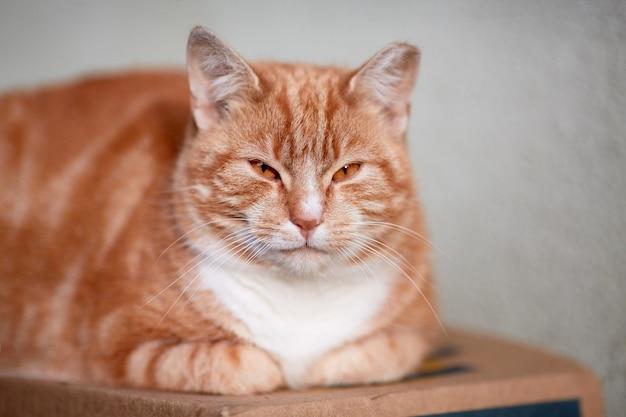 Eine obdachlose rote katze mit einem beschnittenen ohr sitzt auf einer schachtel Premium Fotos