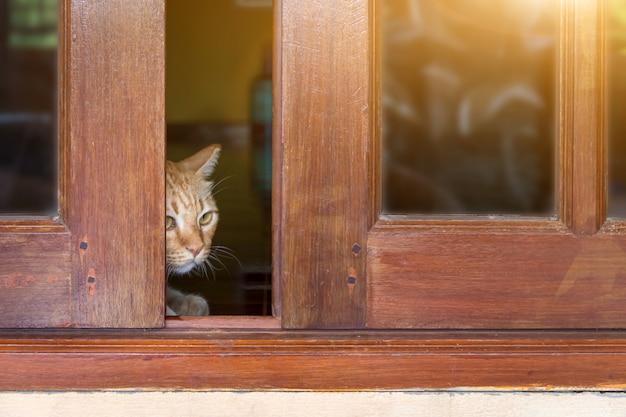 Eine pelzige getigerte katze schaut hinter der tür hervor, eine katze schaut hinter einer holztür hervor Premium Fotos