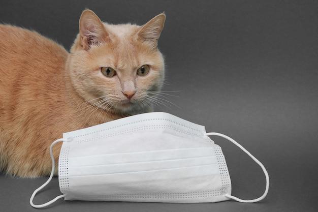 Eine rote katze liegt in der nähe einer gesichtsmaske. konzept der veterinärdienste. Premium Fotos