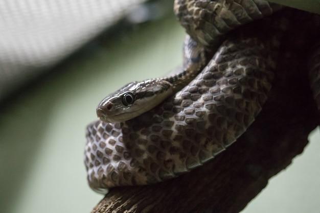 Eine schlange auf einem baum um sich in die natur einzufügen Premium Fotos