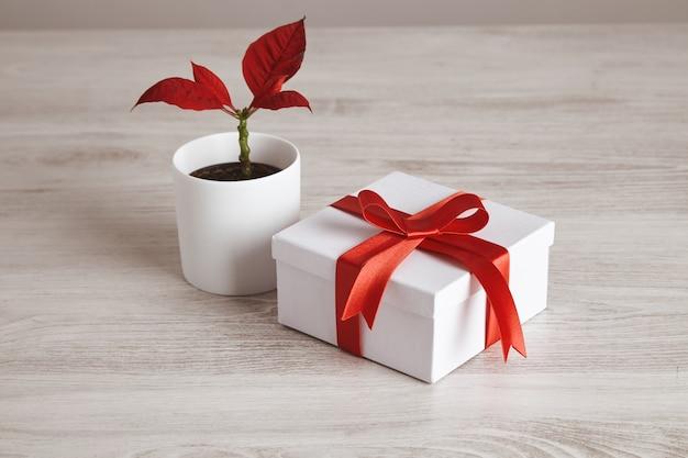 Einfache geschenkbox gebunden mit rotem seidenband nahe roter blumenpflanze. romantische liebe für valentinstag, feiertage und feste Kostenlose Fotos