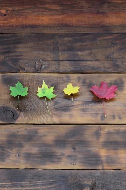 Einige der vergilbten gefallenen herbstblätter in verschiedenen farben auf der hintergrundoberfläche von natürlichen holzbrettern von dunkelbrauner farbe Premium Fotos