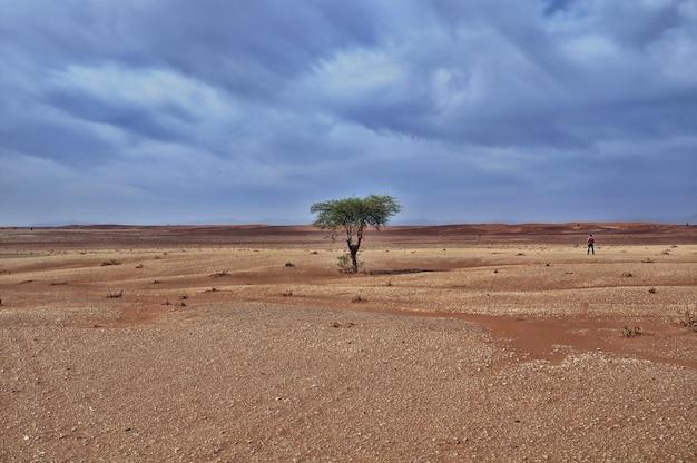 Einsamer baum in einem wüstengebiet unter dem atemberaubenden bewölkten himmel während des tages Kostenlose Fotos