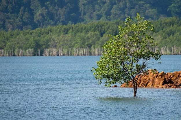 Einzelner baum allein im meer aus dem süden thailands Premium Fotos