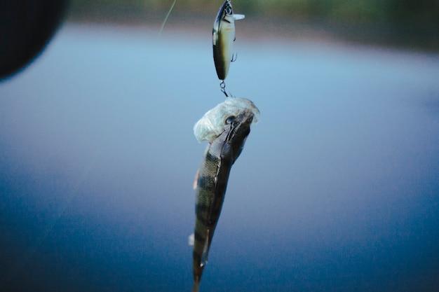 Einzelner fisch sockte fischenköder gegen defocused hintergrund ein Kostenlose Fotos