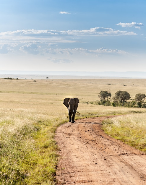 Elefant in der savanne spazieren Kostenlose Fotos