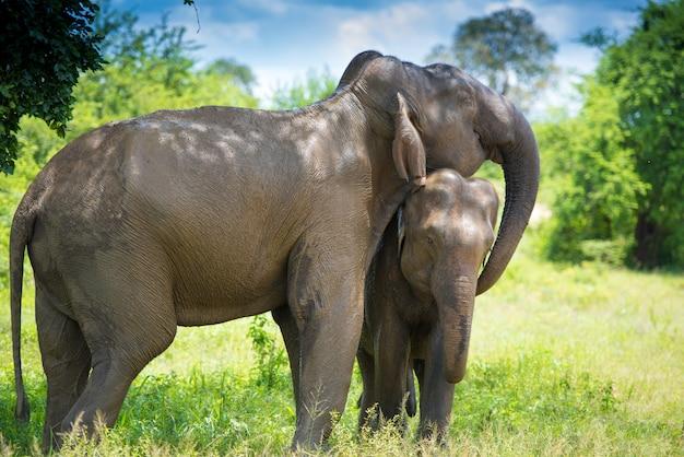 Elefanten im dschungel Premium Fotos