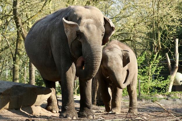 Elefanten im dschungel Kostenlose Fotos