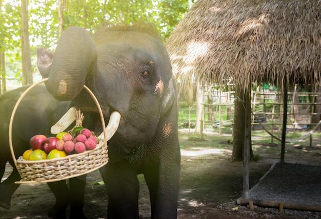 Elefanten nehmen obstkorb auf. Premium Fotos