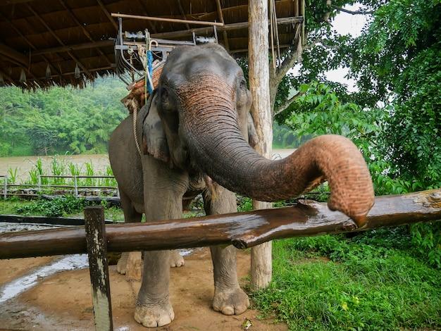 Elefanten sind im zoo Premium Fotos
