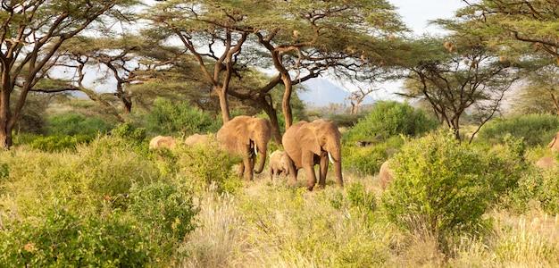 Elefanten spazieren durch den dschungel inmitten vieler büsche Premium Fotos