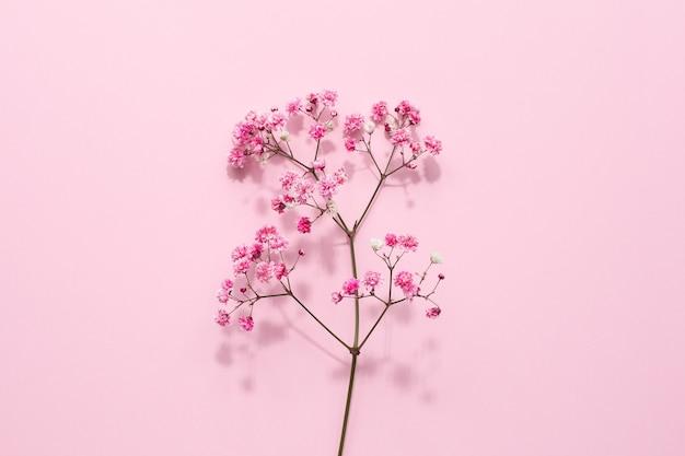Elegantes blumiges zartes rosa Premium Fotos