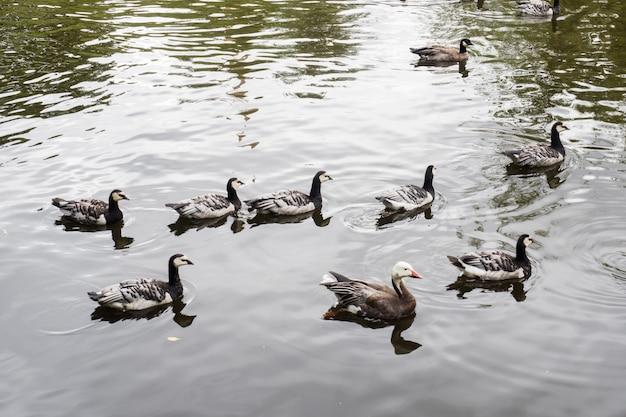 Enten im zoo an einem sonnigen sommertag Premium Fotos