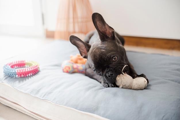 Entzückende französische bulldogge, die mit spielwaren spielt Kostenlose Fotos