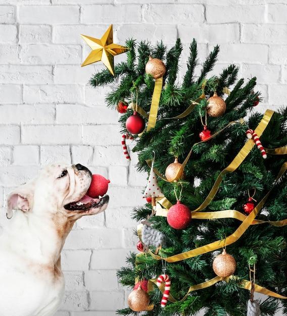 Entzückender bulldoggewelpe, der nahe bei einem weihnachtsbaum steht Kostenlose Fotos
