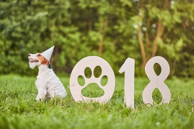 Entzückender glücklicher foxterrierhund am neuen jahr greetin des parks 2018 Premium Fotos