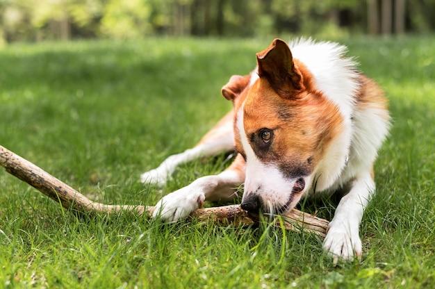 Entzückender hund, der im park spielt Kostenlose Fotos