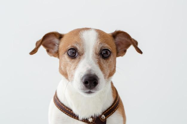 Entzückender hund, der kamera betrachtet Premium Fotos