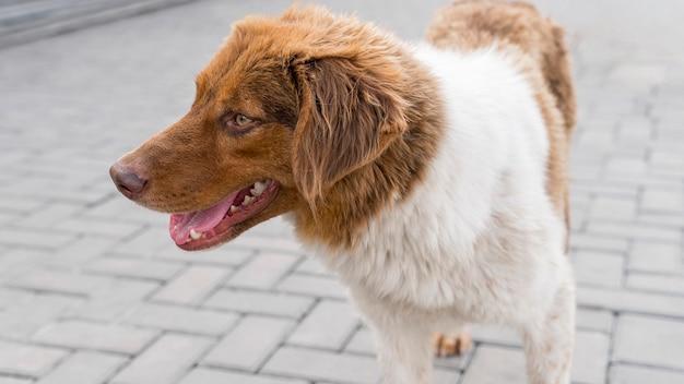 Entzückender hund im schutz draußen, der darauf wartet, adoptiert zu werden Kostenlose Fotos