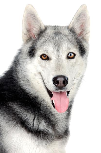 Entzückender hund über weißrückseitenboden Premium Fotos