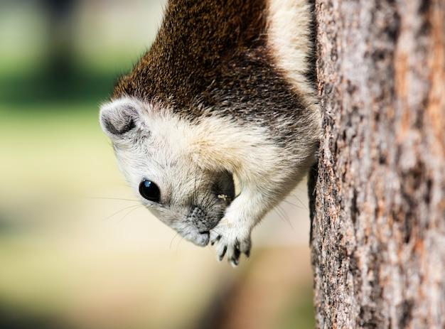 Entzückendes eichhörnchen auf dem baum Kostenlose Fotos