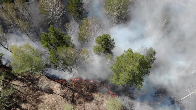 Epische luftaufnahme des rauchenden wilden feuers. große rauchwolken und feuer breiteten sich aus. abholzung von wäldern und tropischen dschungeln. amazonas und sibirische waldbrände. trockenes gras brennt. klimawandel, ökologie, erde Premium Fotos