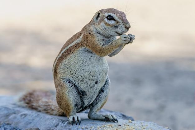 Erdhörnchen essen Kostenlose Fotos