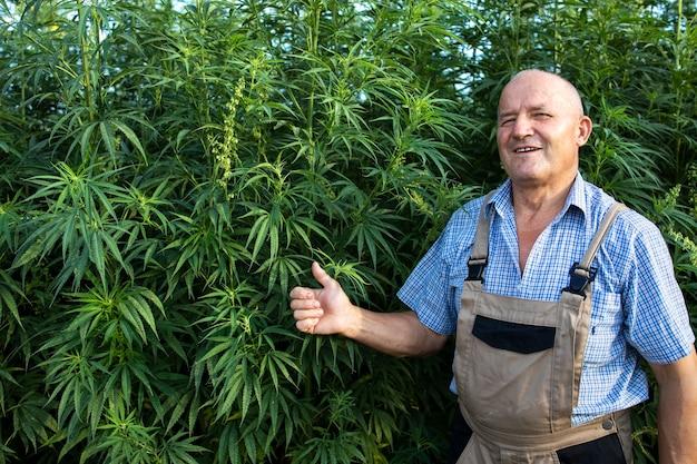 Erfolgreiche produktion von cannabispflanzen Kostenlose Fotos