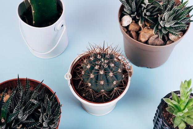 Erhöhte ansicht von verschiedenen arten von kaktuspflanzen im topf über blauem hintergrund Kostenlose Fotos
