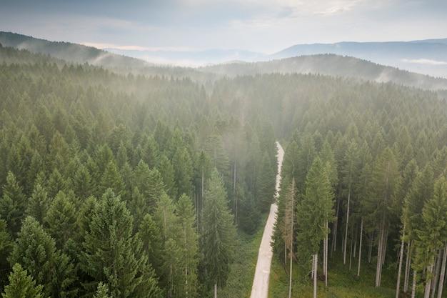 Erkundung der wälder Premium Fotos