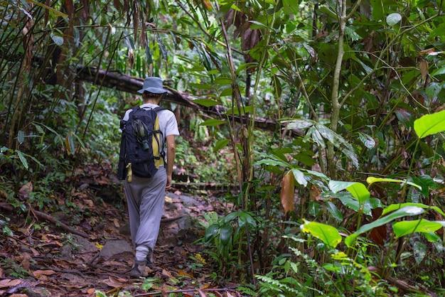 Erkundung des regenwaldes von borneo Premium Fotos