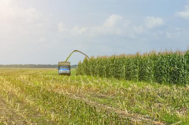 Ernte von saftiger maissilage durch einen mähdrescher und transport per lkw Premium Fotos