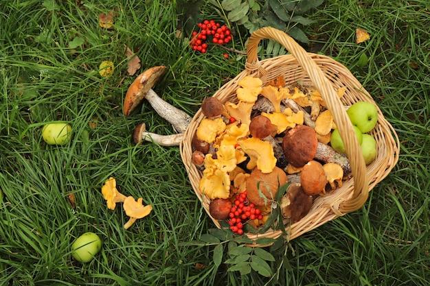 Ernte von steinpilzen, pfifferlingen in einem korb mit äpfeln und ebereschenbeeren im gras. Premium Fotos
