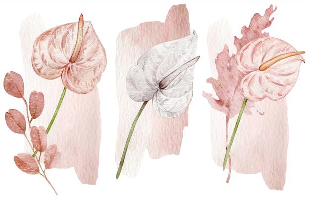 Erröten sie rosa und weiße tropische blumen - anthurien. hand gezeichnete illustration lokalisiert auf weißer wand. Premium Fotos